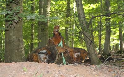 """""""Burgfrieden"""" Fuchs und Dachs in einem Bau"""
