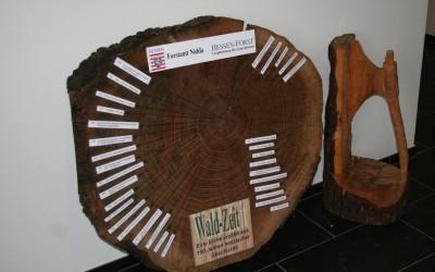 Waldpädagogik  Baumscheibe