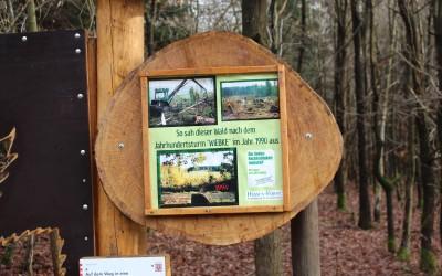 """Waldfenster """" Zukunft"""" bei Kloster Engelthal"""