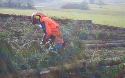 Ferdi bei der Sturmholzaufarbeitung