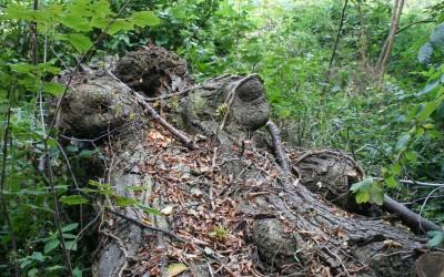 Der Urklangbaum
