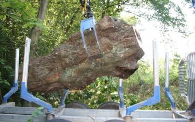Lindenstamm für den Klangbaum